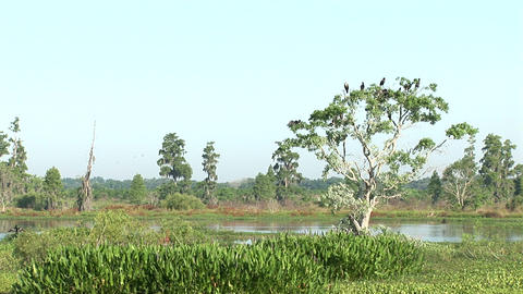 Birds in swamp Stock Video Footage