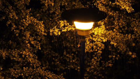 Lamp between the trees Stock Video Footage