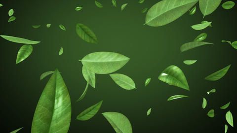 Flying leaves in looped animation. HD 1080. Alpha Stock Video Footage