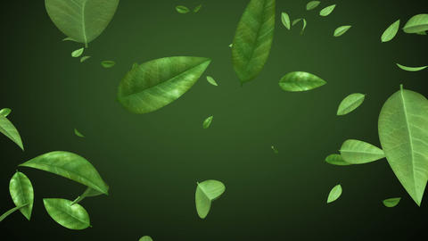 Flying leaves in looped animation. HD 1080. Alpha  Animation
