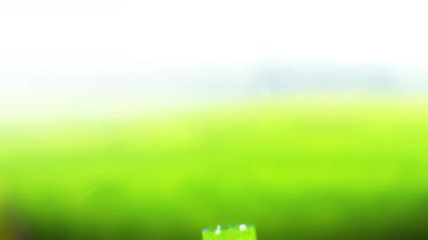 Beautiful Water splash in freeze motion Stock Video Footage