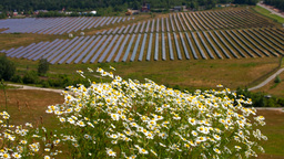 Chamomile and solar panels Stock Video Footage