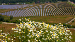 Chamomile and solar panels Footage