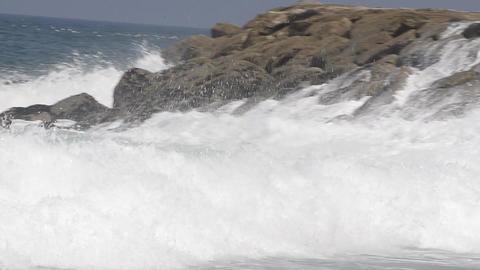 Dino Carmo Stock Video Footage
