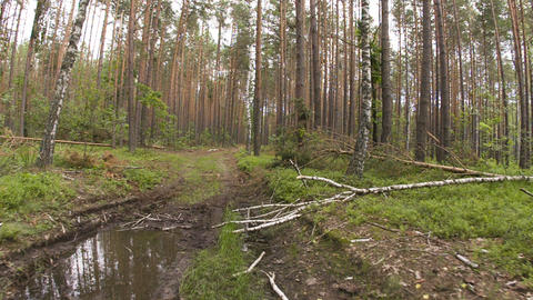 Walking POV in the forest, wide angle Stock Video Footage
