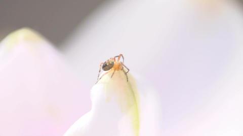 Spider in flower Stock Video Footage