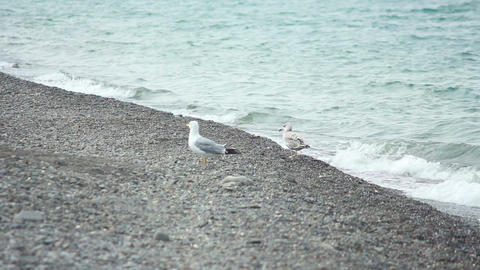 Gulls on the Beach 4 Stock Video Footage