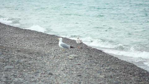 Gulls on the Beach 4 Stock Video Footage