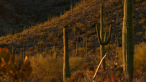 The Mexico, Arizona, Baja or Mojave desert studded Footage
