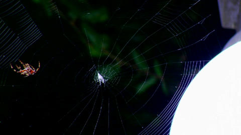 A spider builds a web Stock Video Footage