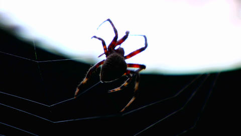 Close up of a spider building a web Stock Video Footage