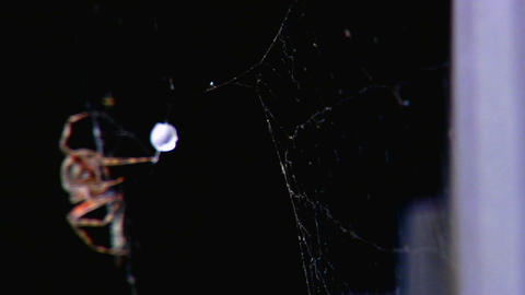 Rack focus close up of a spider building a web Stock Video Footage