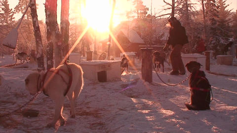 Early morning in the Arctic with sled dogs and hus Stock Video Footage