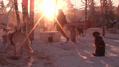 Early morning in the Arctic with sled dogs and hus Footage
