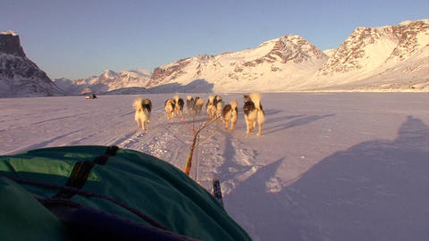 A POV shot from a dogsled heading across the Arcti Footage