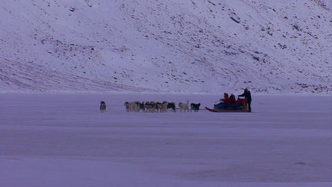 An eskimo dogsled heads across the frozen tundra i Stock Video Footage