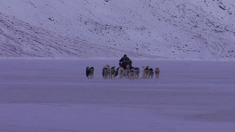 An eskimo dogsled heads across the frozen tundra i Footage