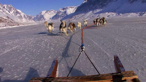 POV from a dogsled heading across the Arctic tundr Stock Video Footage