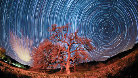 Time lapse star trail streaks over a valley oak tr Footage