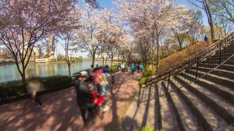 Seoul City 219 HD Stock Video Footage