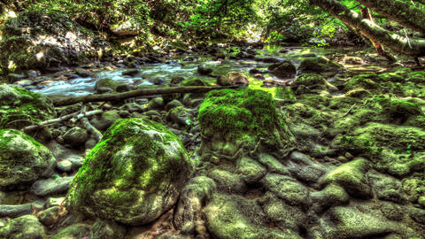 4k. Moss-Covered Boulders. HDR Time Lapse shot mot Stock Video Footage