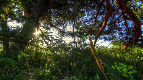 4k. Forest at dawn. HDR Time Lapse Shot Motorized Stock Video Footage