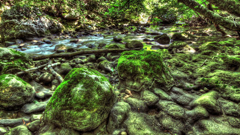 Moss-Covered Boulders. HDR Time Lapse shot motoriz Footage