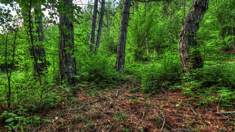 Forest at dawn. HDR Time Lapse Shot Motorized Slid Footage