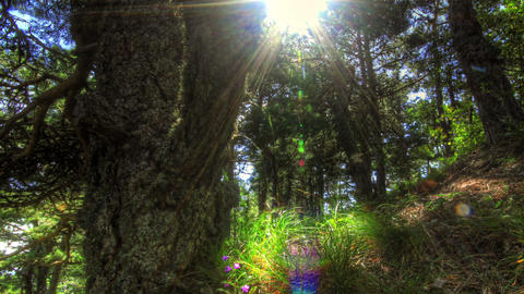 Forest at dawn. HDR Time Lapse Shot Motorized Slid Stock Video Footage