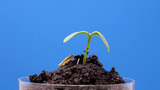 Rotate Plant 2k stock footage
