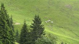 European Alps Kitzbuhel Austria Aerial 38 cows Footage