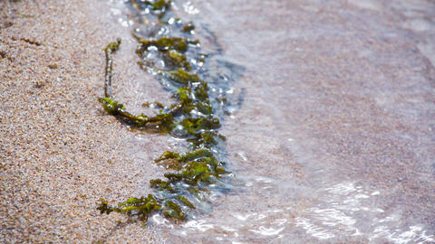 Water plant in sand and waves. Shot to RAW, wide d Stock Video Footage