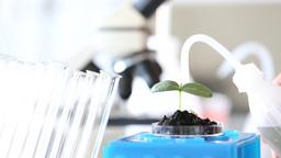 GMO plant genetics laboratory Footage