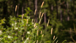 The grass in the summer forest Stock Video Footage