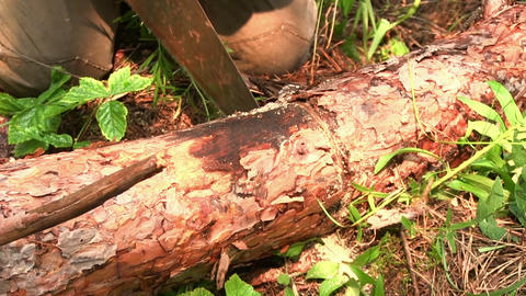 Cutting timber with a hand saw Stock Video Footage
