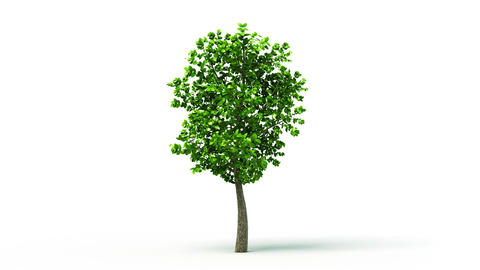 Growing up tree animated background. HD Animation