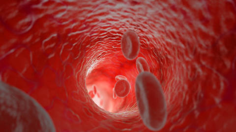 Red blood cells flowing in artery. HD. Looped Stock Video Footage