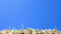 growth of green grass plants Stock Video Footage