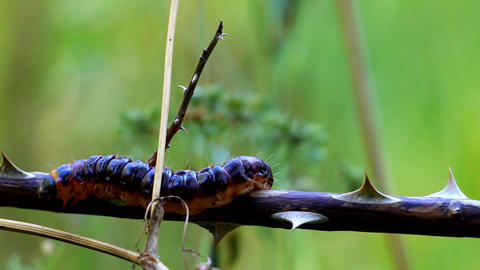 caterpillar macro Stock Video Footage