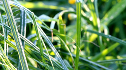 Fresh morning dew on grass Stock Video Footage