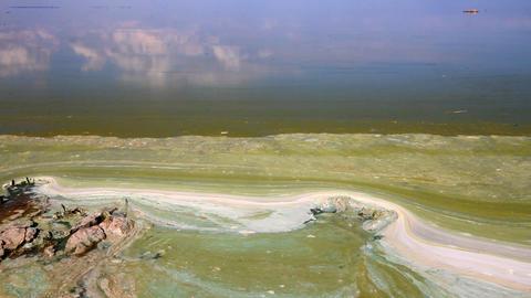 Algae polluted water ( green scum) Footage