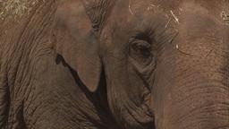Elephant eye close up Stock Video Footage
