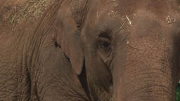 Elephant eye close up Footage