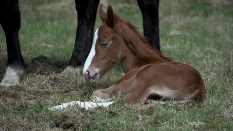 Baby horse in woods Stock Video Footage