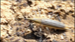 run of a weevil bug Stock Video Footage
