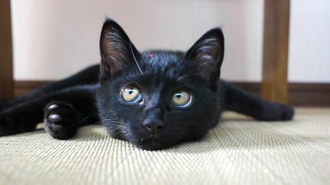 黒ネコ ビデオ