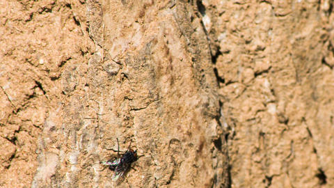 Fly macro on the stone. Shot to RAW, wide dynamic  Footage
