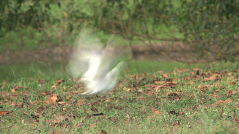 Bird flying away Stock Video Footage