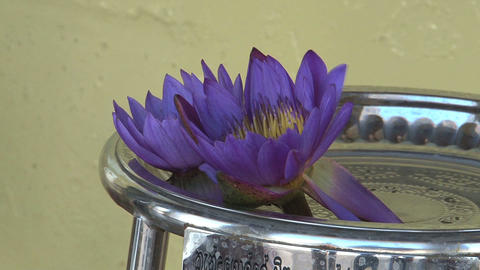 National flower of Sri Lanka in Temple Stock Video Footage
