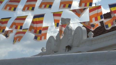 Monkeys at Dagoba in Anuradhapura, Sri Lanka Stock Video Footage